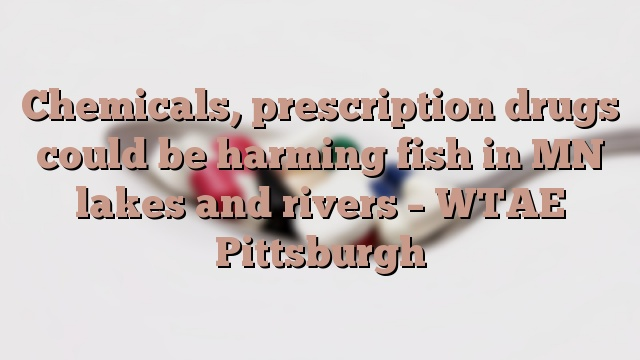 Chemicals, prescription drugs could be harming fish in MN lakes and rivers – WTAE Pittsburgh